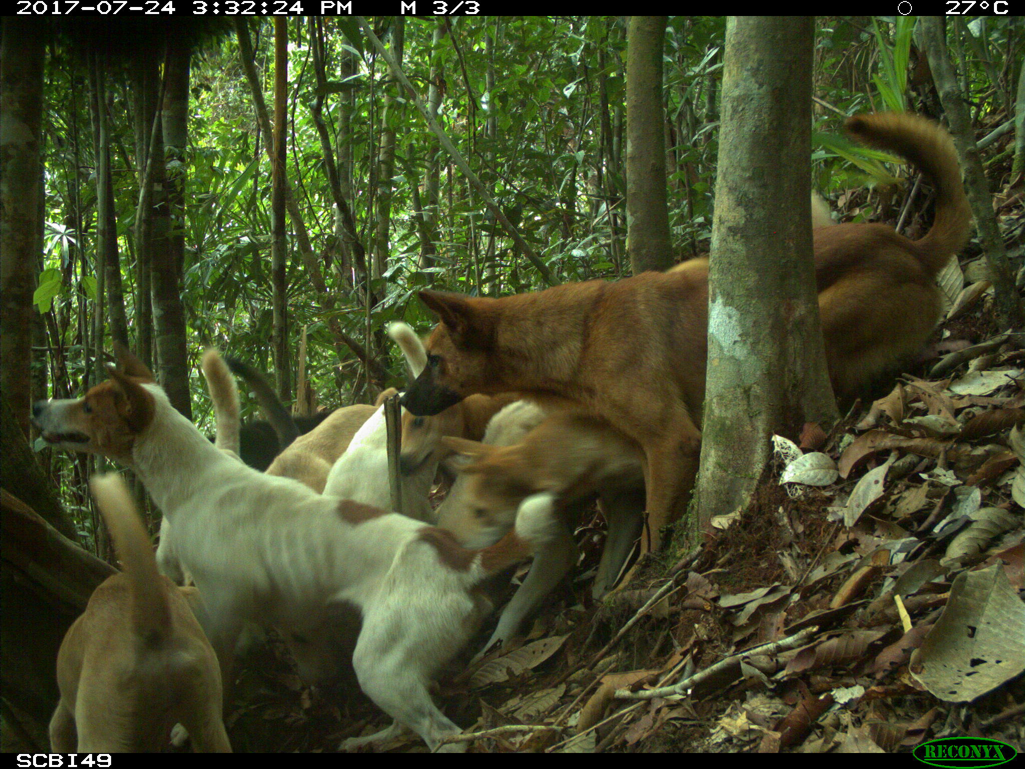 dogs impact wildlife