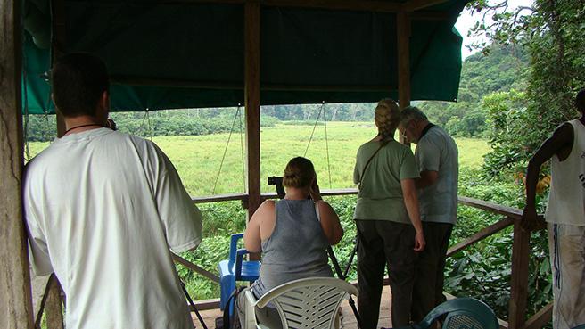 People watching elephants