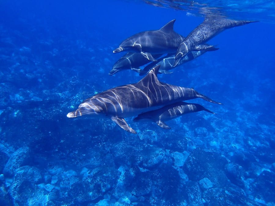 You have to be careful even when you swim with wild dolphins. You could still be hurting the population even though they can swim away.