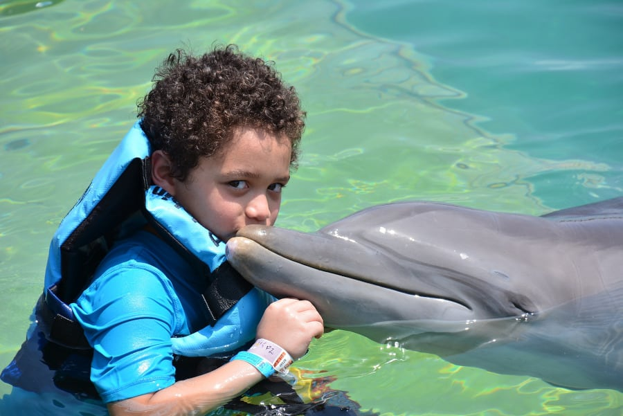 I would NEVER swim with captive dolphins, but I also learned not to swim with wild dolphins either. Dolphins are incredibly intelligent, social animals and they are placed in captivity indefinitely for tourist satisfaction. Photo from Pixabay.com.