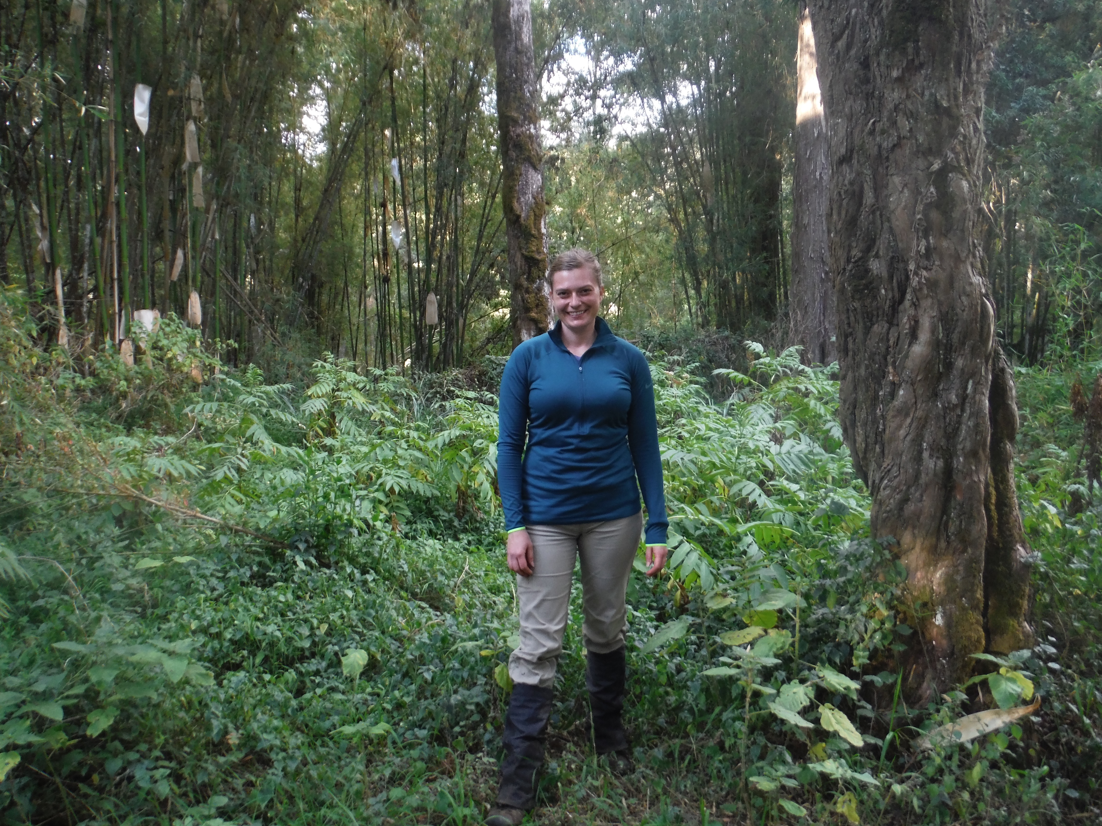Bamboo in Kenya