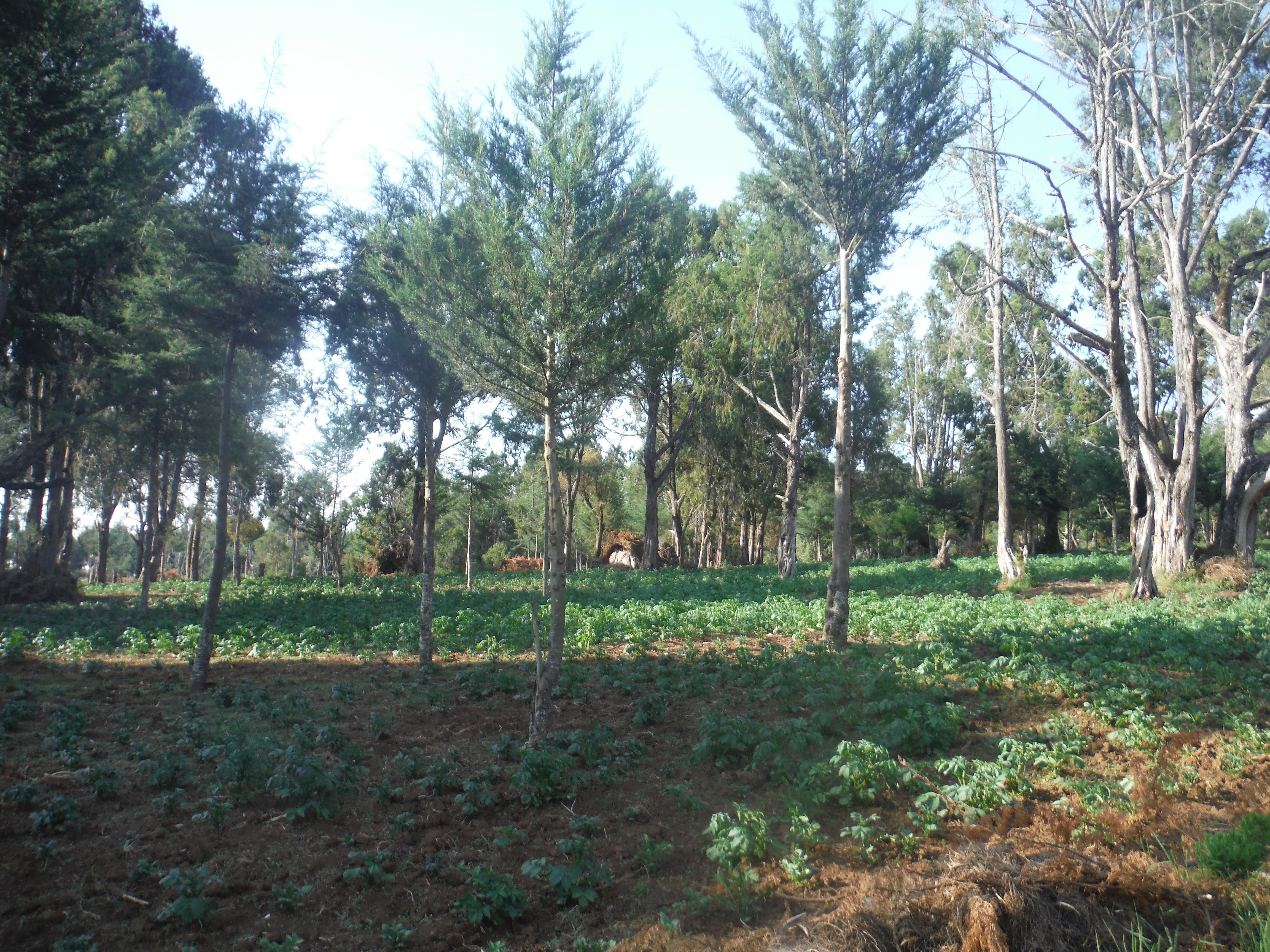 Farm land in Kenya