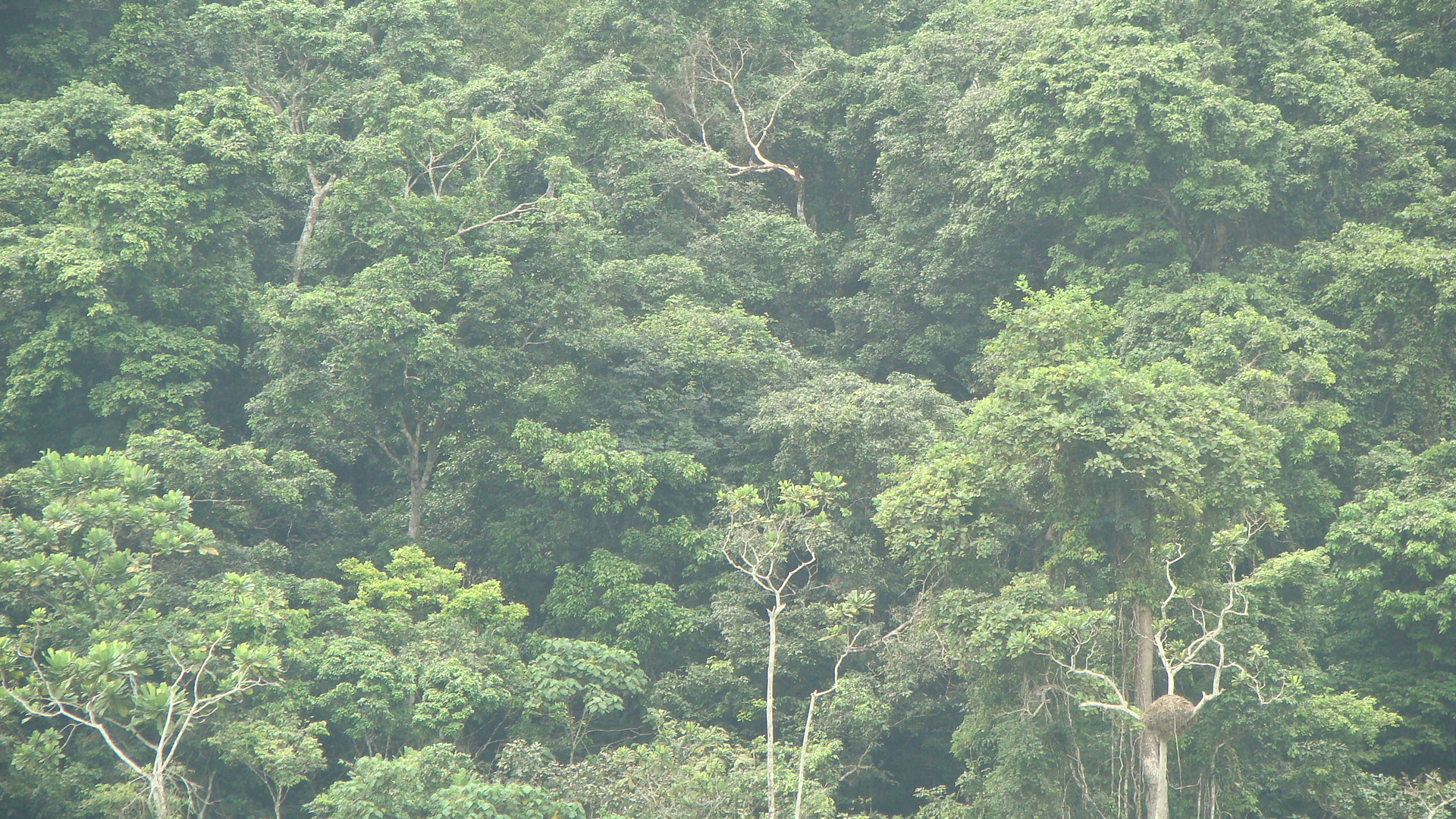 Forest for Climate Change