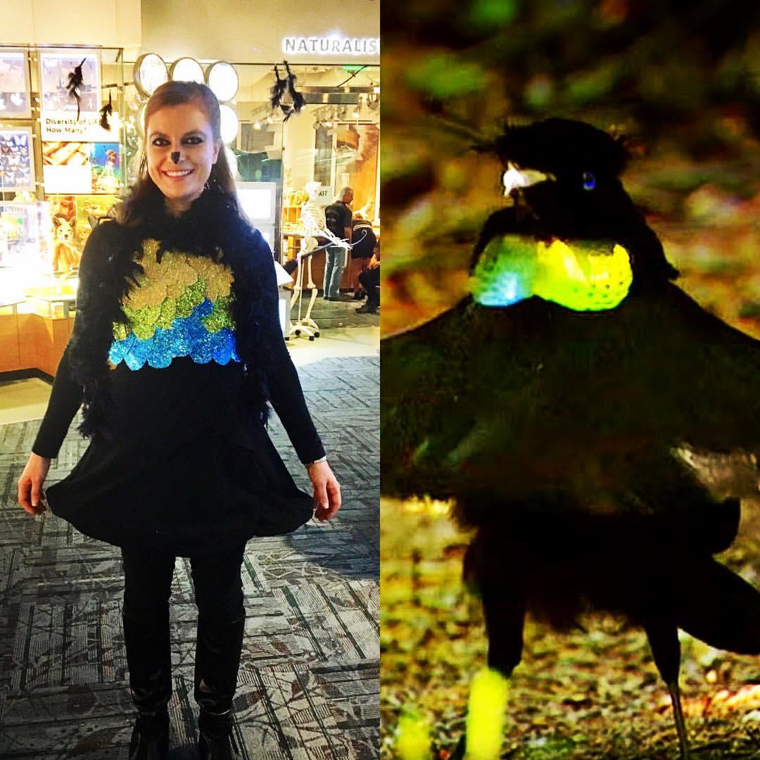 Bird of paradise costume