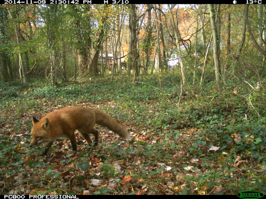 7 Reasons Why Reconyx Hyperfire is the Best Camera Trap