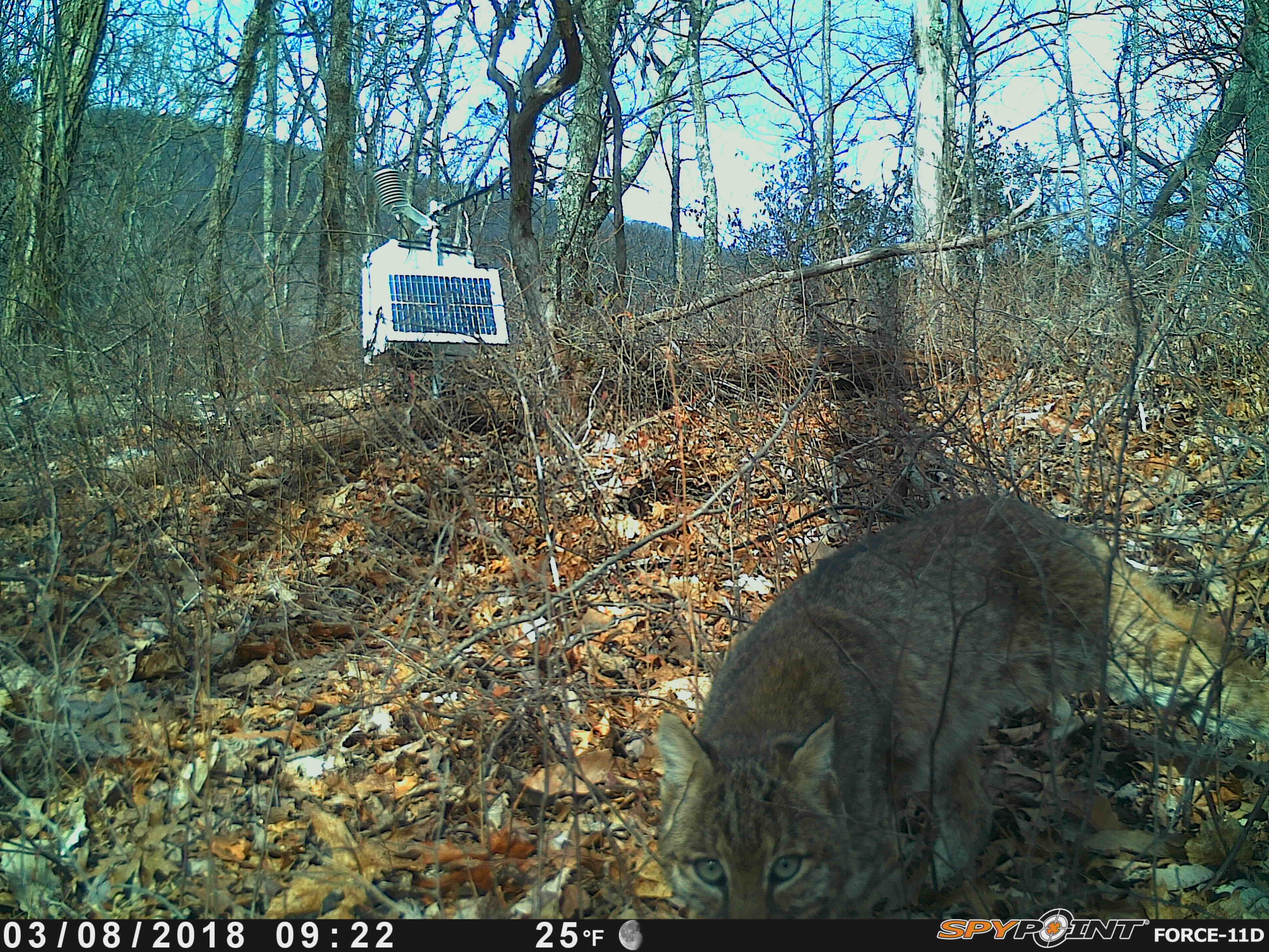 other camera trap brand