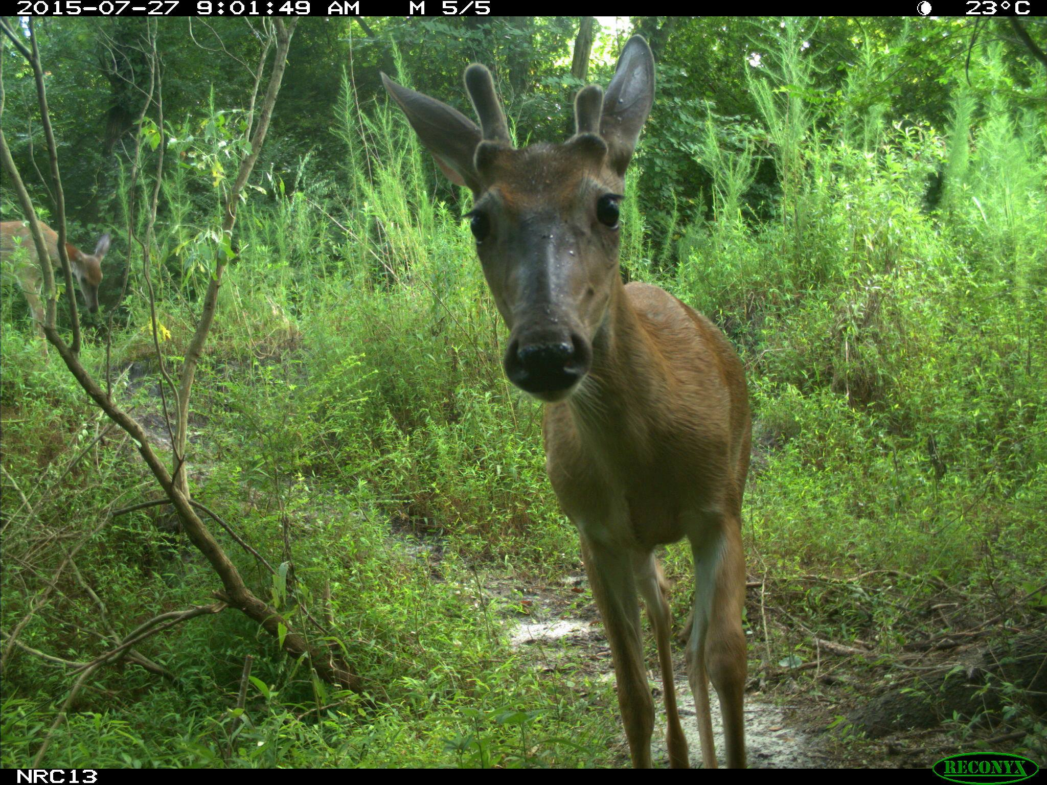 12 Amazing Camera Trap Photos from North Carolina Taken By Kids