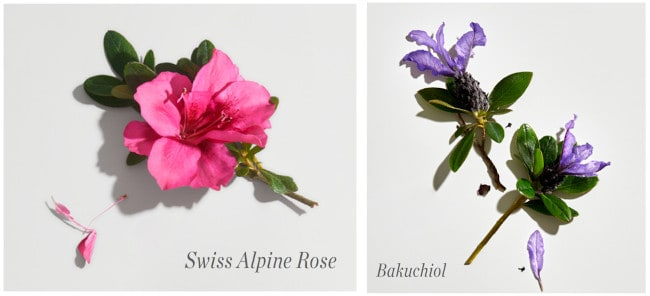 Swiss alpine rose and bakuchiol are two of the main ingredients in Countertime.