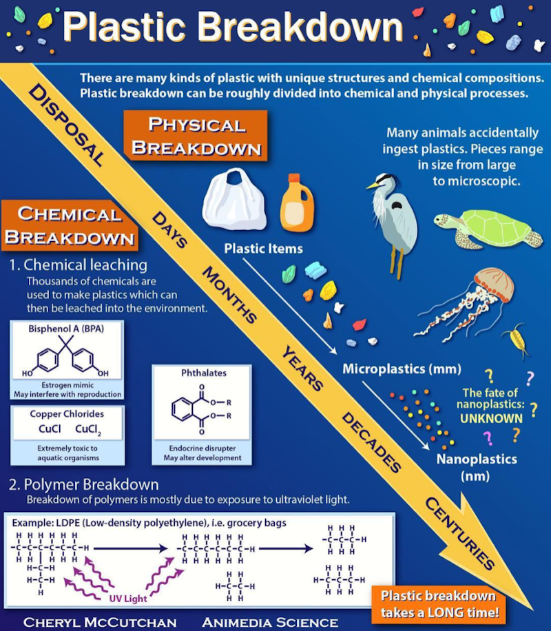 Infographic by Cheryl McCutchan that explains the chemistry behind plastic breakdown.