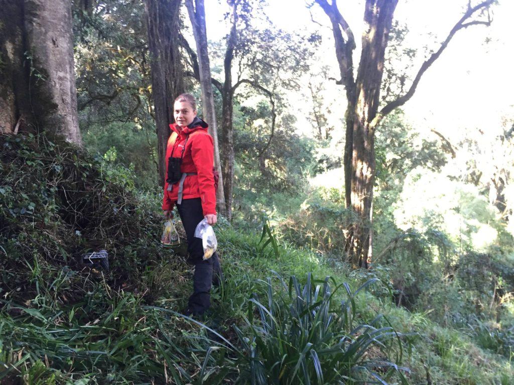 wildlife biologist setting live mammal traps