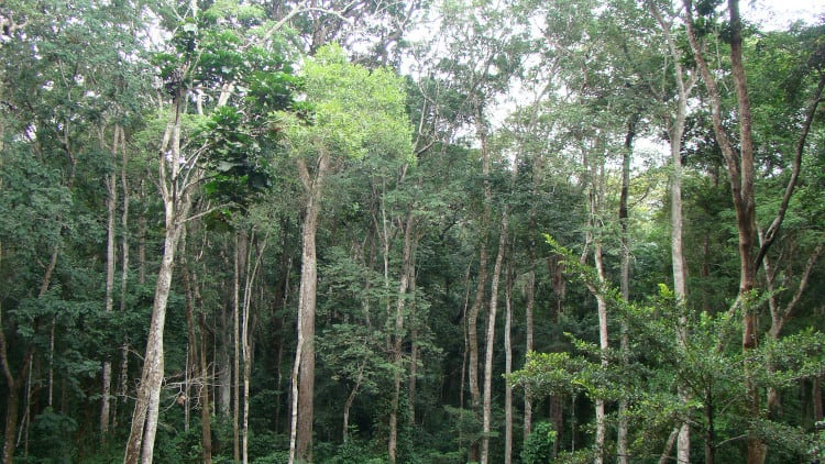 Tropical rainforests like this one in Gabon absorb lots of carbon.