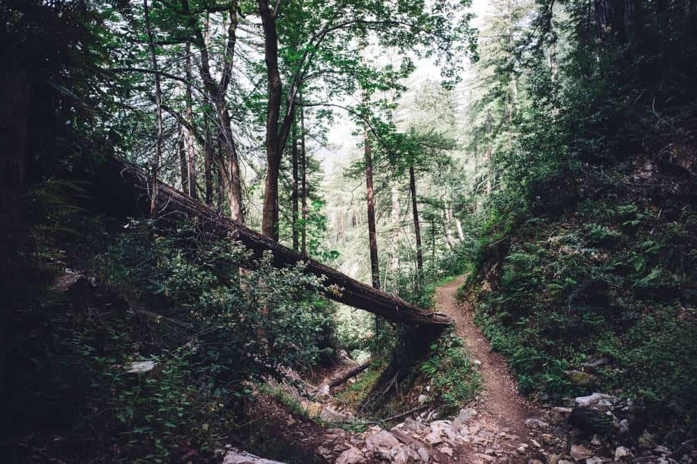 An image of a forest