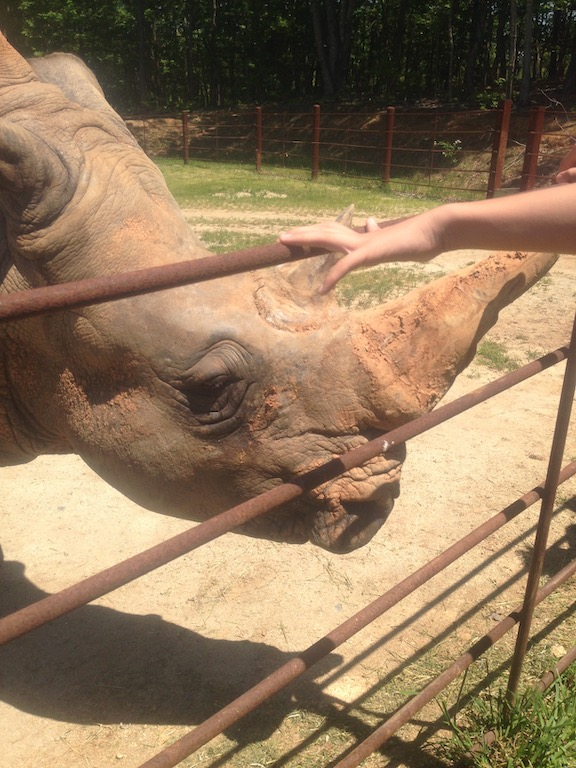Rhino at the North Carolina Zoo