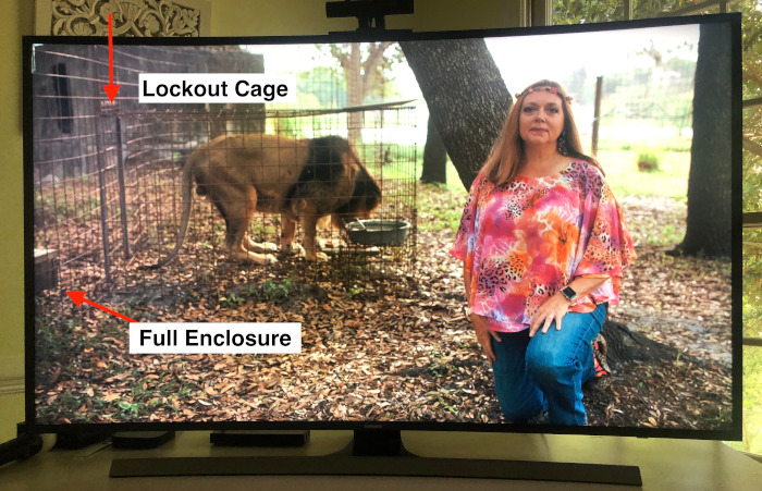 """The shots of """"small cages"""" that you see in Tiger King are lockout cages."""