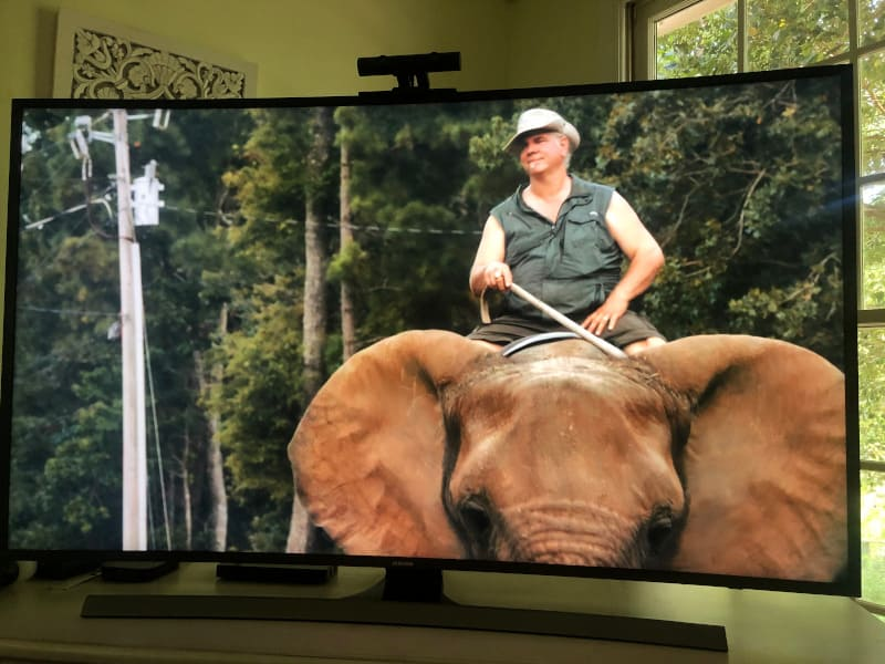 Why does Doc Antle always have a cane when he rides Bubbles the elephant?
