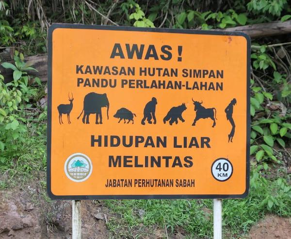 Animal crossing sign in Deramakot.