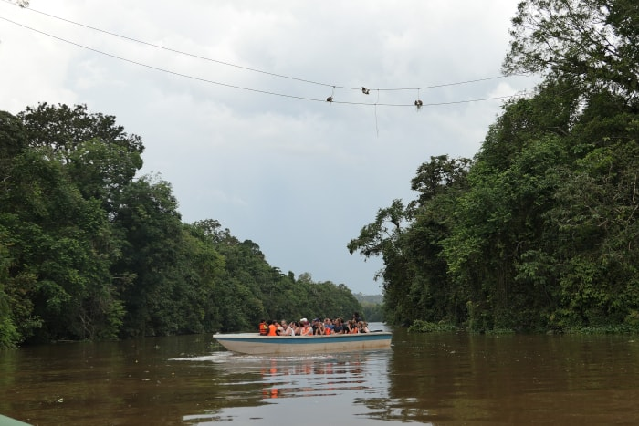 """Cruise boat"" on the Kinabatangan River."
