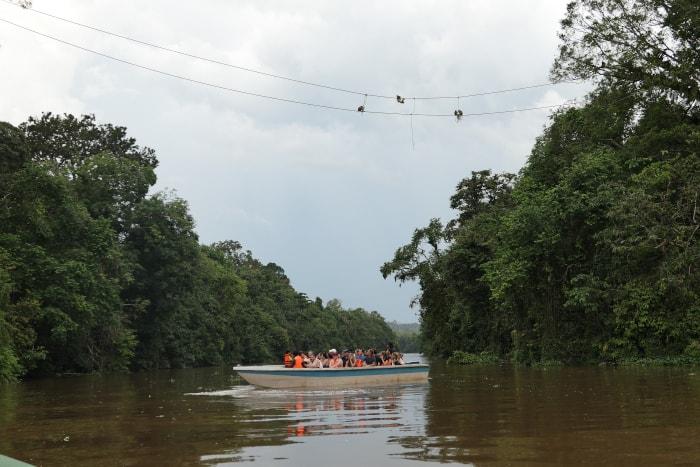 """Cruise boat"" on the Kinabatangan River."