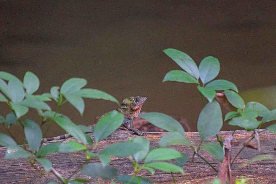 A closeup picture of a lizard