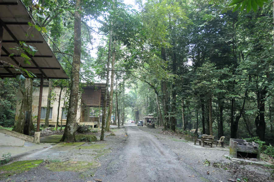 A picture of the lodging area in the forest