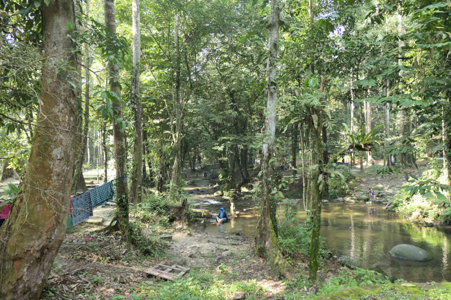 Sungai Congkak Forest