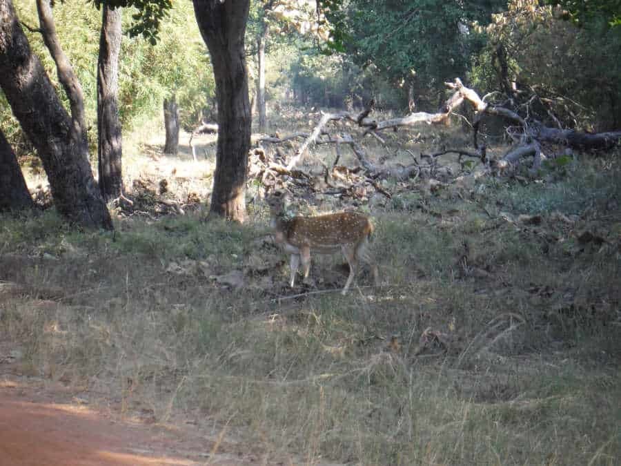 A picture of a spotted deer