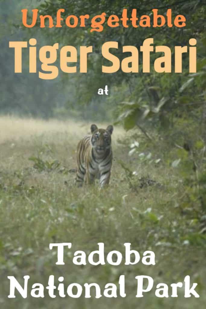 A giftcard of Tiger Safari Tadoba National Park