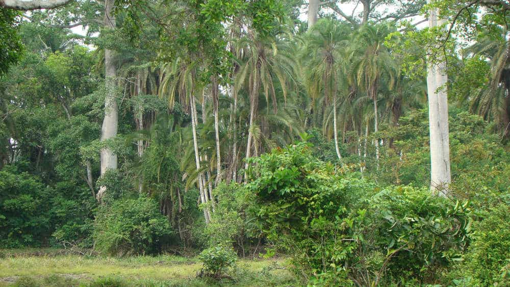 Thicker vegetation in parts of the bai where animals can hide.