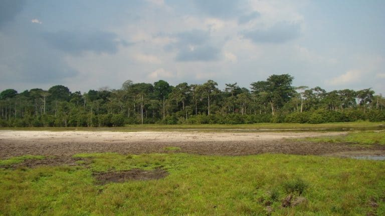 Bai in Odzala National Park, Republic of Congo.