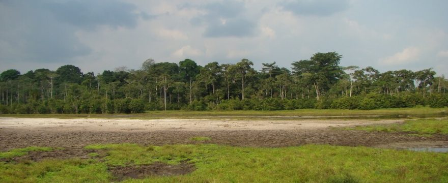 Field Site Visit to Odzala National Park, Republic of Congo