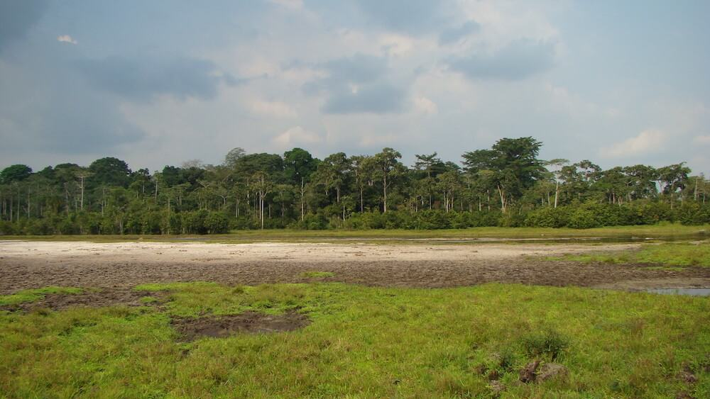 Bai in Odzala National Park, Republic of Congo.