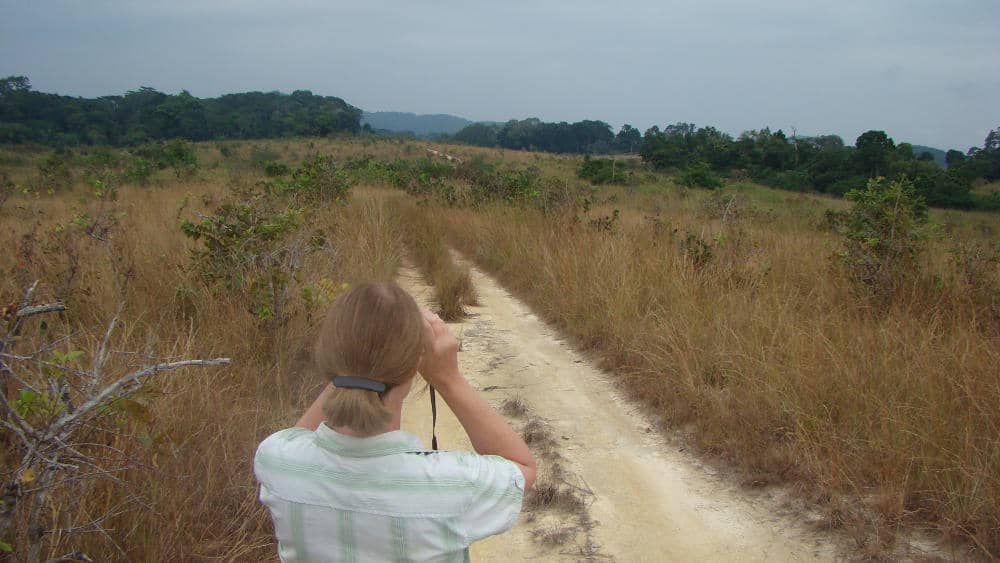 My advisor looking in the savannas for more elephant groups.