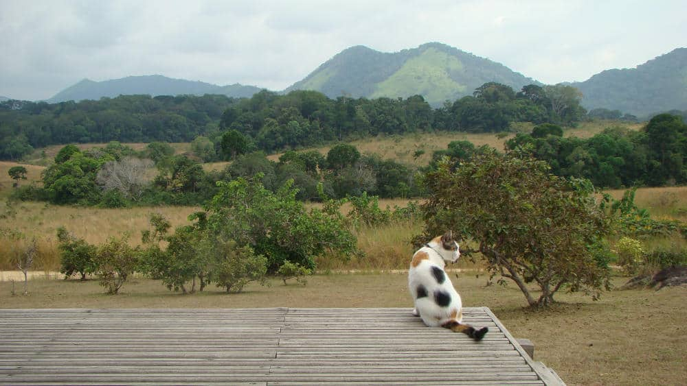 a picture of a cat in Lope National Park