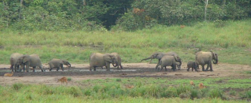Field Site Visit to Ivindo National Park, Gabon
