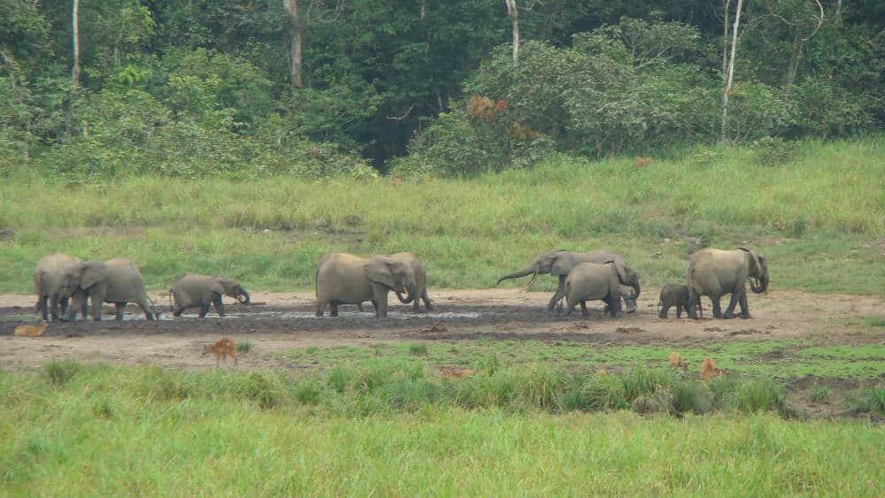 The elephants are enjoying the bai.