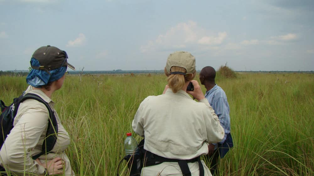 In Odzala National Park, we had to traverse some savanna habitat before we got to the bai.