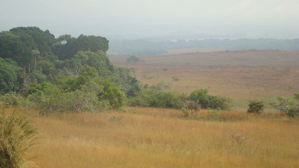 a picture of thick trees in the savanna