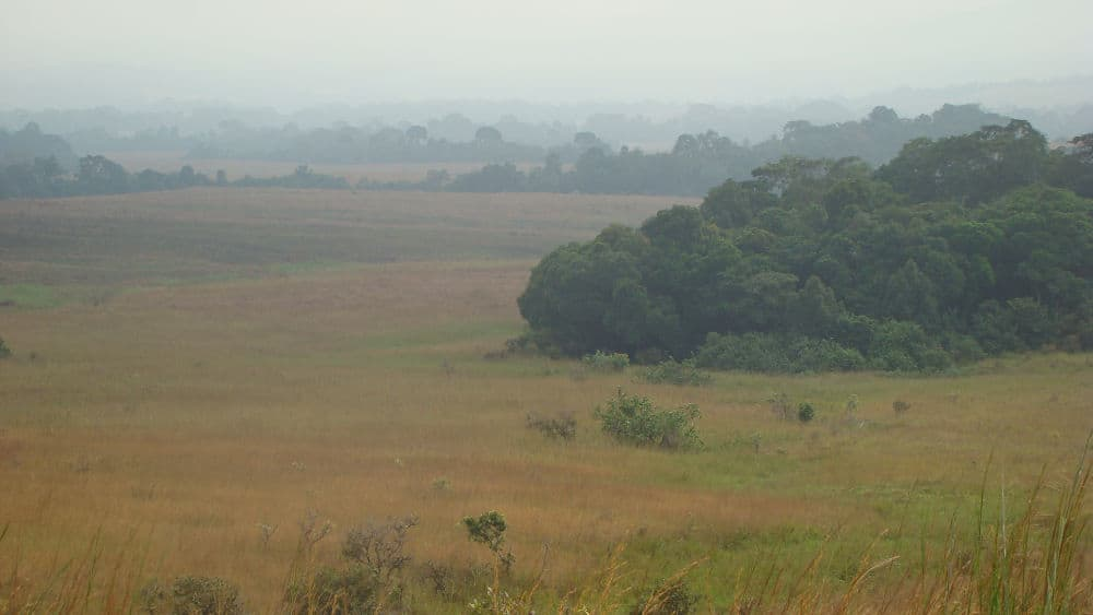 The savannas in Lopé National Park have been maintained for thousands of years by anthropogenic burnings.