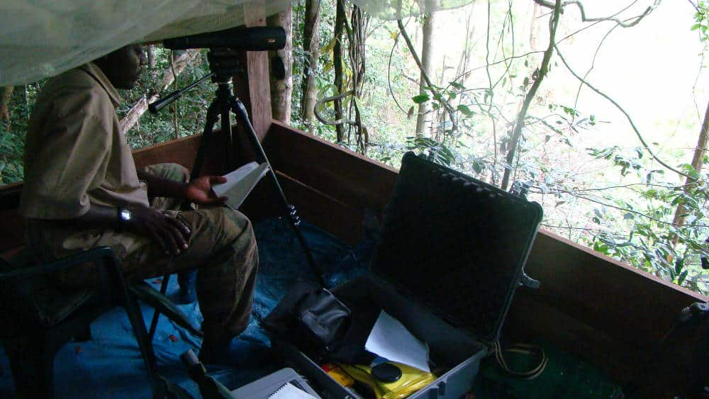 A researcher studying animals that come to this smaller bai in Ivindo.