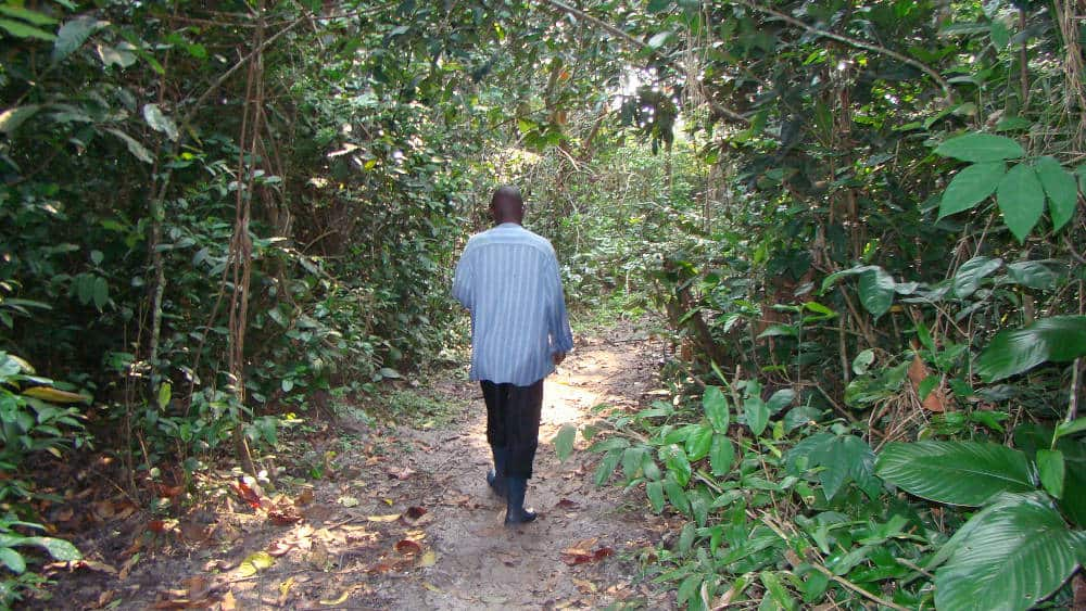 The large bai in Odzala National Park was surrounded by a small patch of forest. Our guide leading the way.