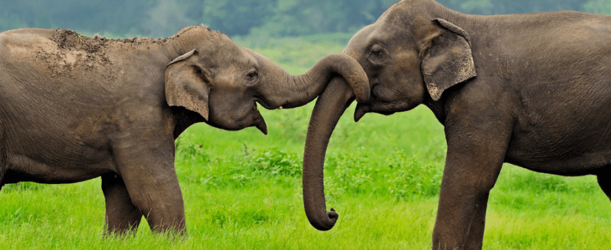 #36 Elephant Friendly Tea: A Win-Win for Elephants and Communities