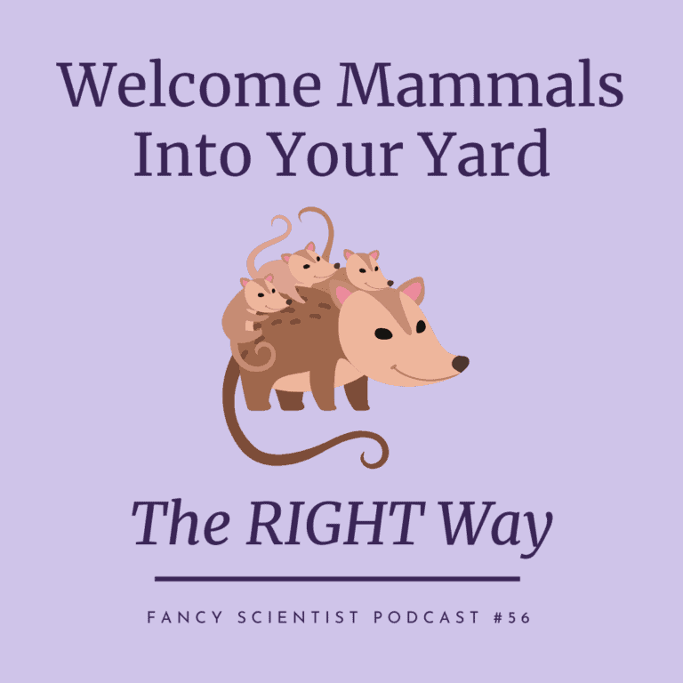 Welcome mammals to your yard