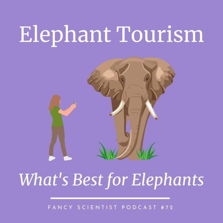 elephant-tourism